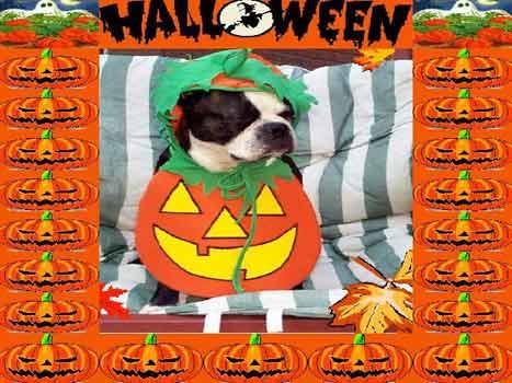 Happy Halloween 53, Halloween