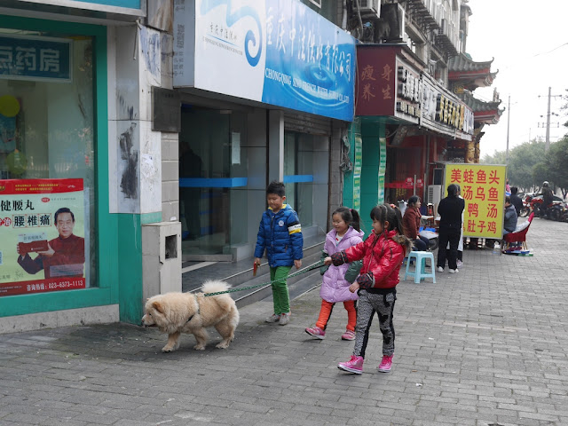 three kids walking a dog