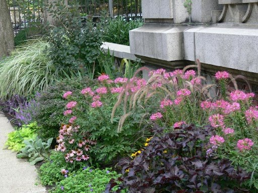 Colors of foliage and flowers enliven a summer border.