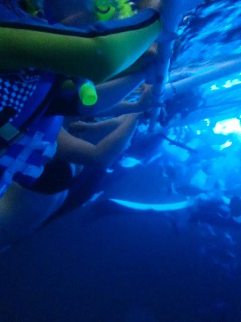 Manta Ray Dive
