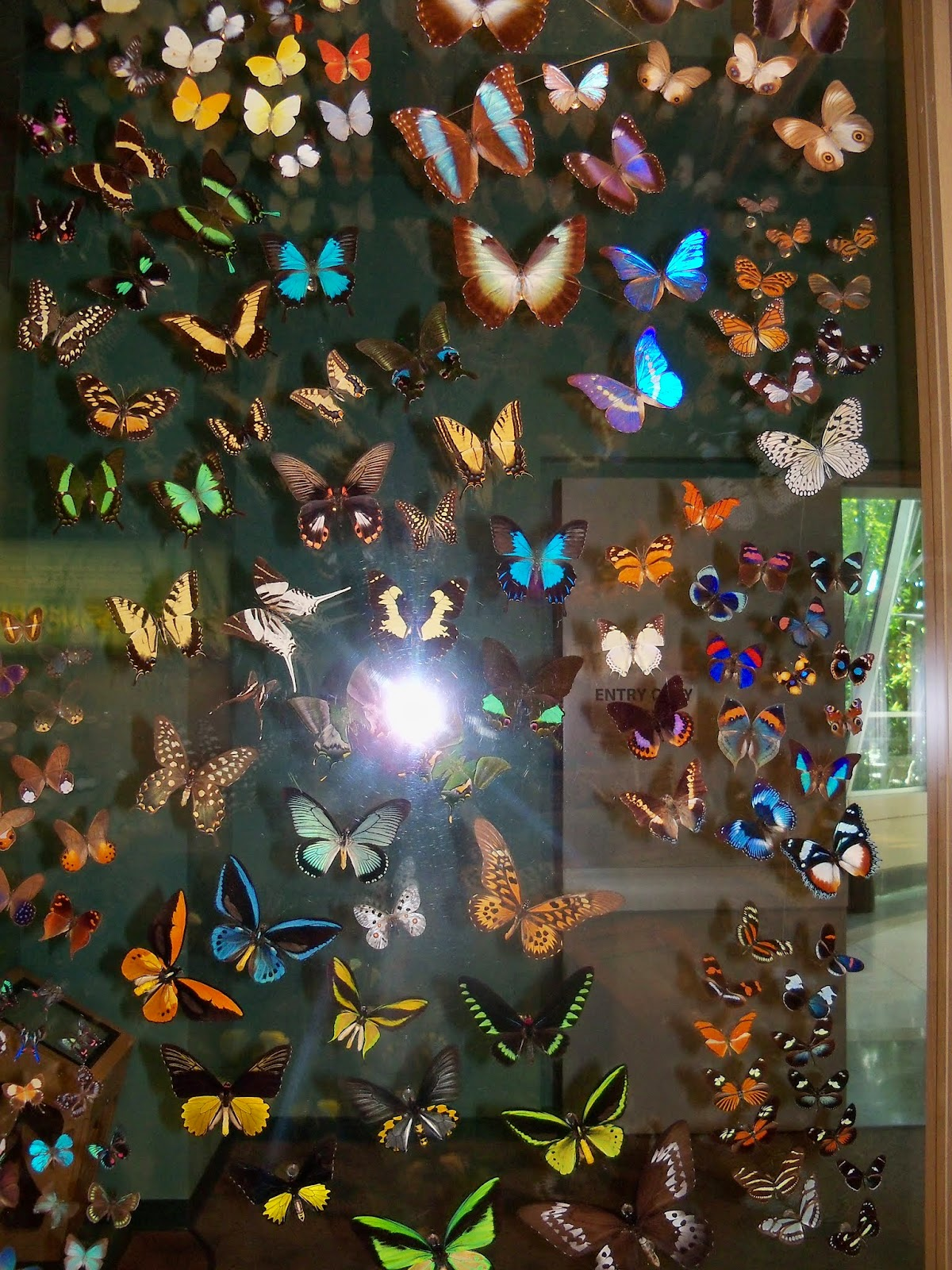 Houston Museum of Natural Science - 116_2860.JPG