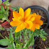 Gardening 2011 - 101_0026.JPG