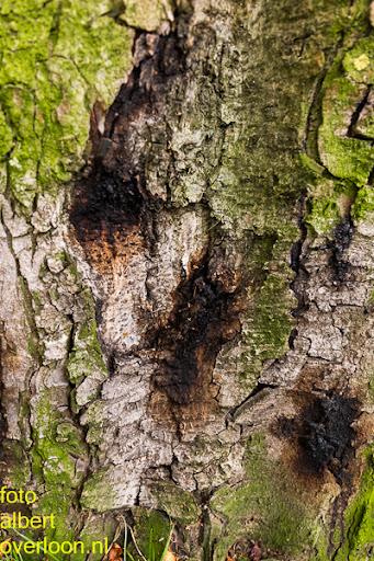 Bomen gekapt Museumlaan in overloon 20-10-2014 (6).jpg