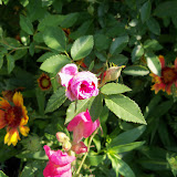 Gardening 2011 - 100_7894.JPG