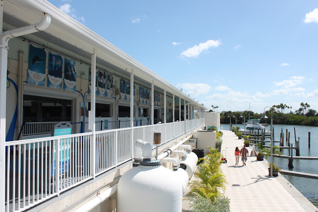 Visiting The Clearwater Marine Aquarium This Is My South