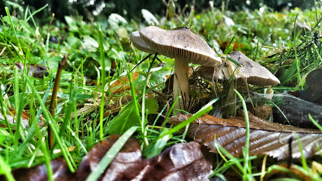 Gorgeous hidden toadstools at Stowe