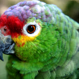 2011-10-25 Bird Park