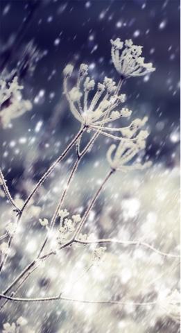 tangkai bunga dilapisi salju