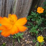 Gardening 2012 - 115_1822.JPG