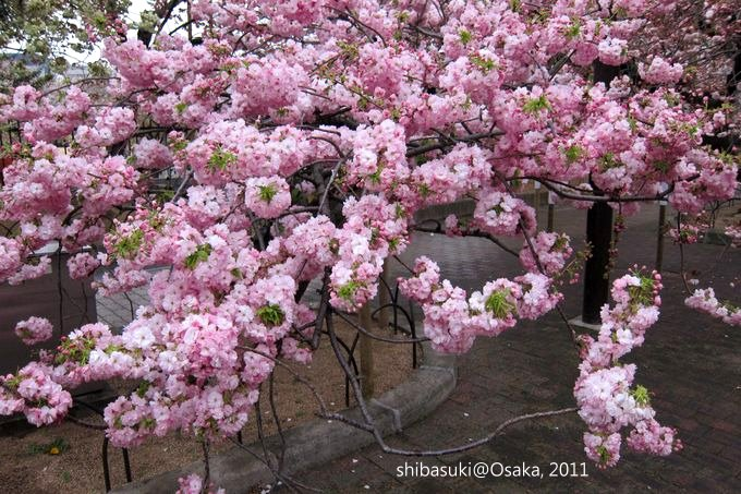 20110415_Osaka-73_大阪造幣局_1_1.JPG