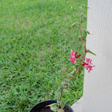 Gardening 2010, Part Two - 101_2424.JPG