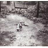 n010-014-1966-tabor-sikfokut.jpg
