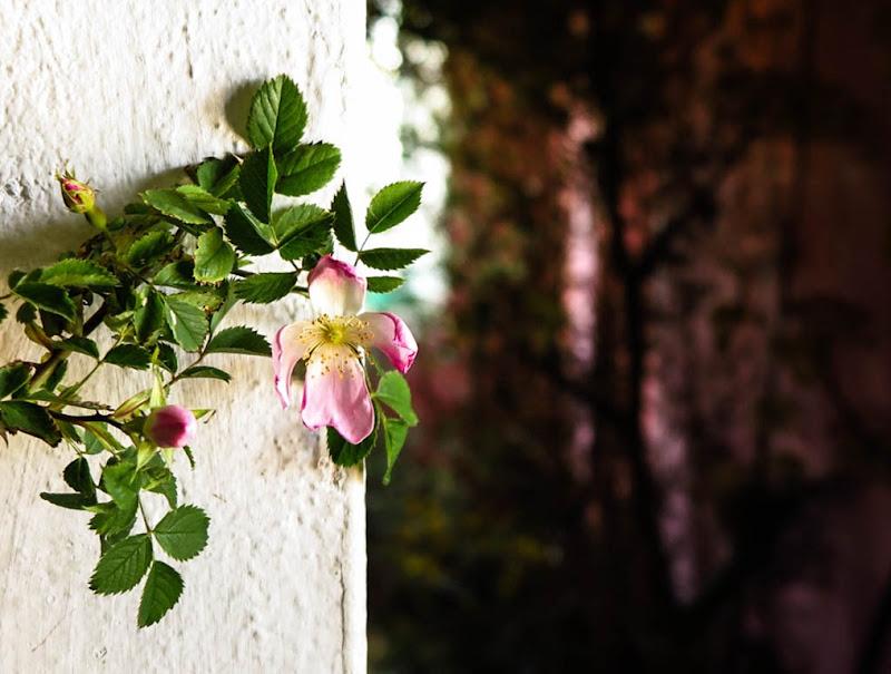 Slow Flowers Italy-14