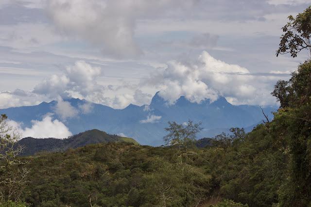 Forêt des nuages au-dessus de La Merced de Buenos Aires, 3100 m (Imbabura, Équateur), 25 novembre 2013. Photo : J.-M. Gayman