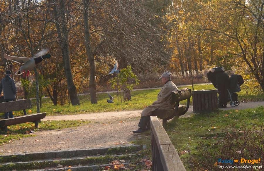 Park Reagana w Gdańsku - kaczki i gołębie