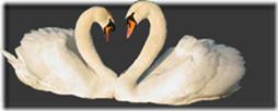 cisnes-buscoimagenes-5_thumb