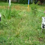 Голева 11. Мы не знаем что у Вас, а у Нас коровки!!!