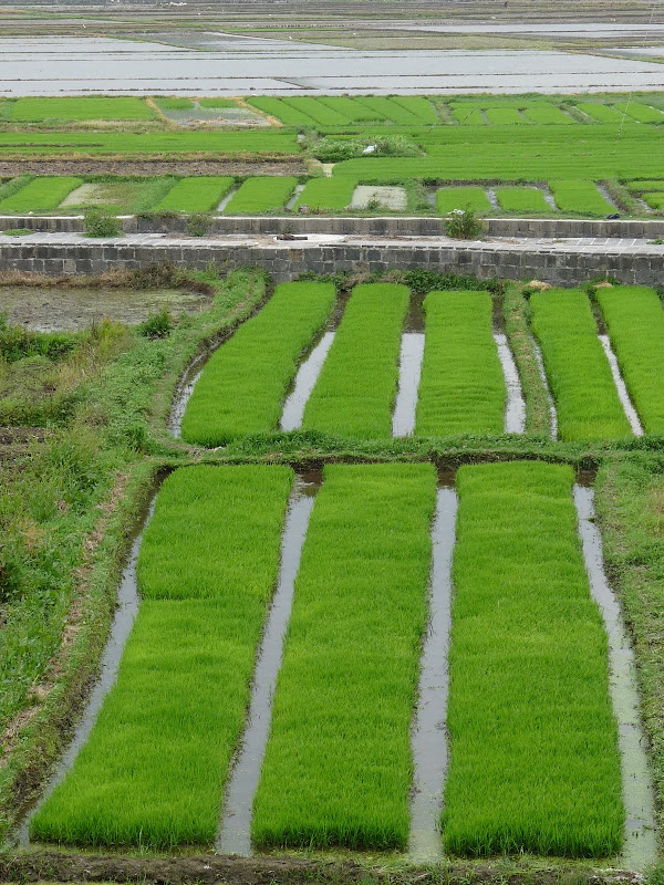 Chine .Yunnan,Menglian ,Tenchong, He shun, Chongning B - Picture%2B709.jpg
