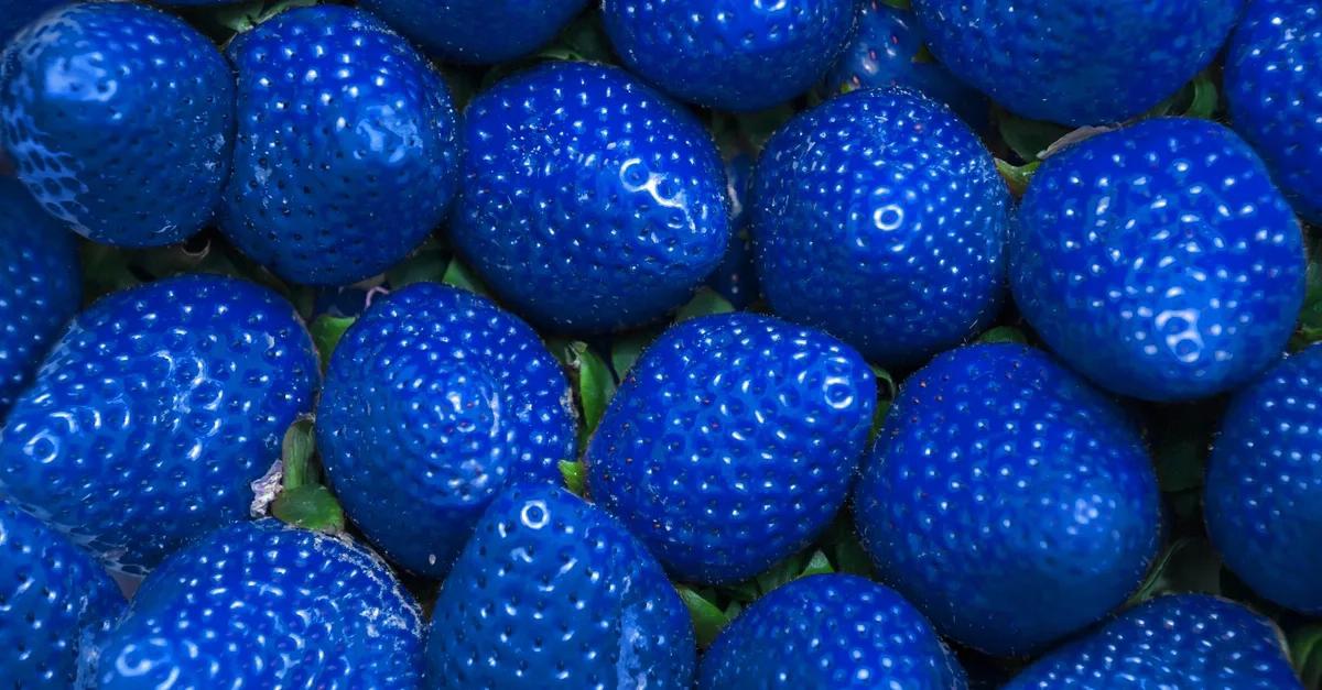Căpșuni albastre, desert