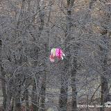 01-05-13 Arbor Hills Nature Preserve - IMGP3963.JPG