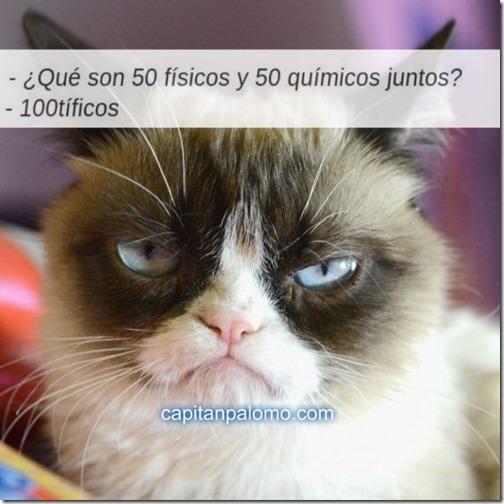 meme del gato gruñon (8)