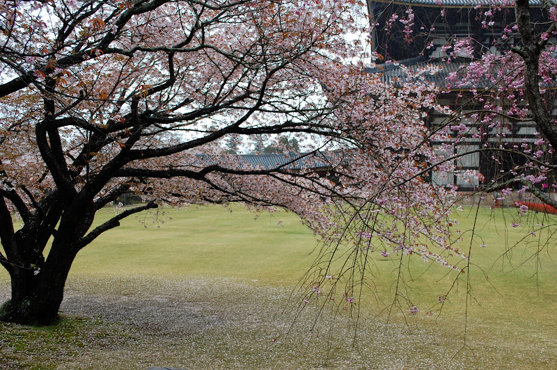 2014 Japan - Dag 8 - jordi-DSC_0497.JPG