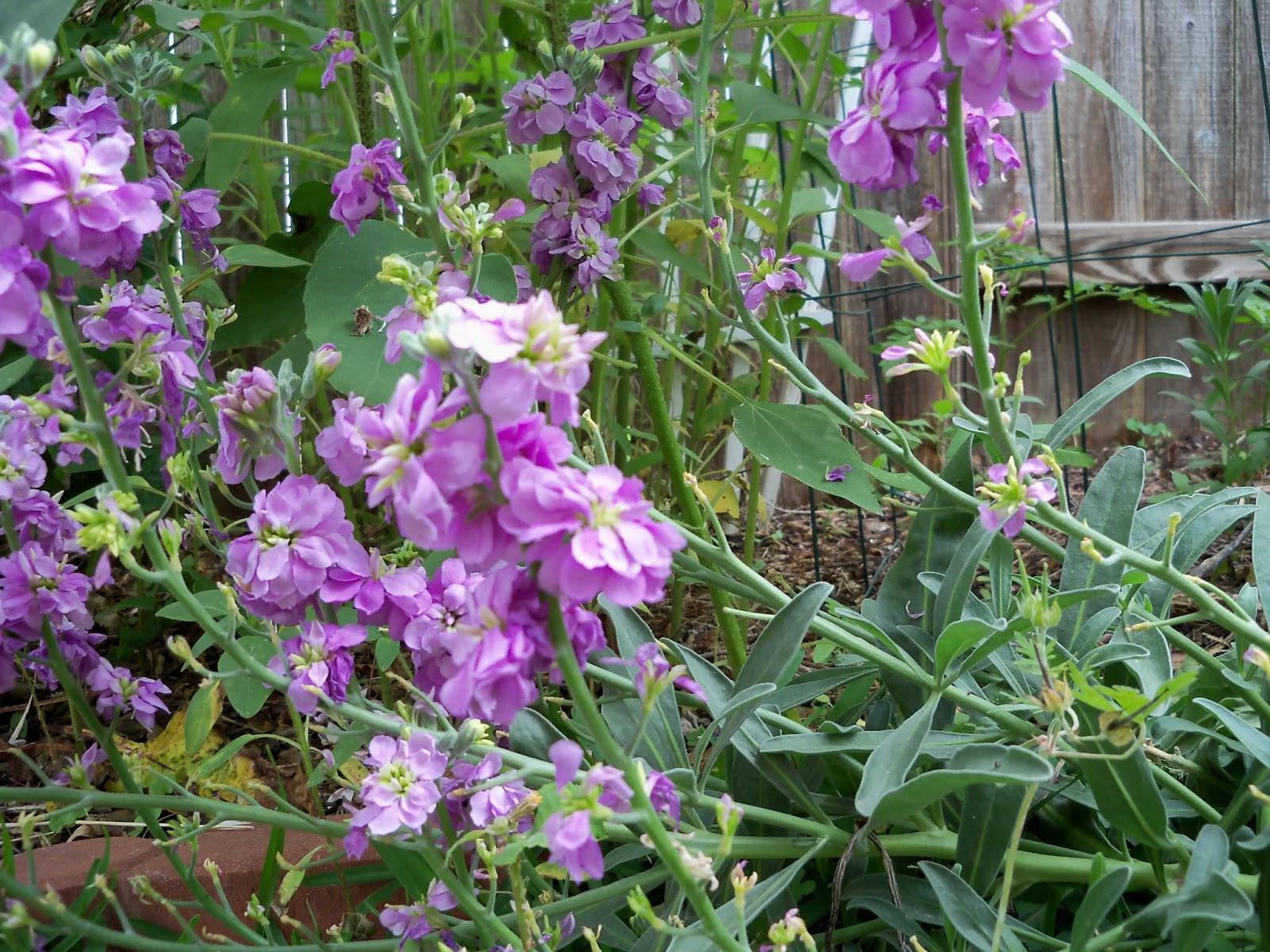 Gardening 2013 - 115_6032.JPG