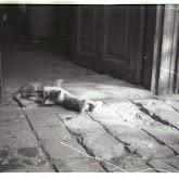 n010-015-1966-tabor-sikfokut.jpg