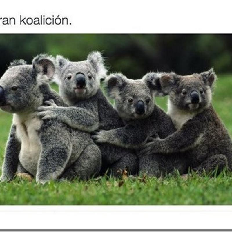 coalición o Koalición, humor para compartir