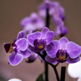 Orchids by Maria Epperhart - Flowers Flower Arangements ( beautiful, plants, nature close up, flowers, naturaleza,  )