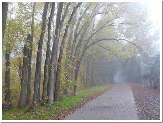 121211_fog_14