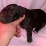 black female @ 1 week