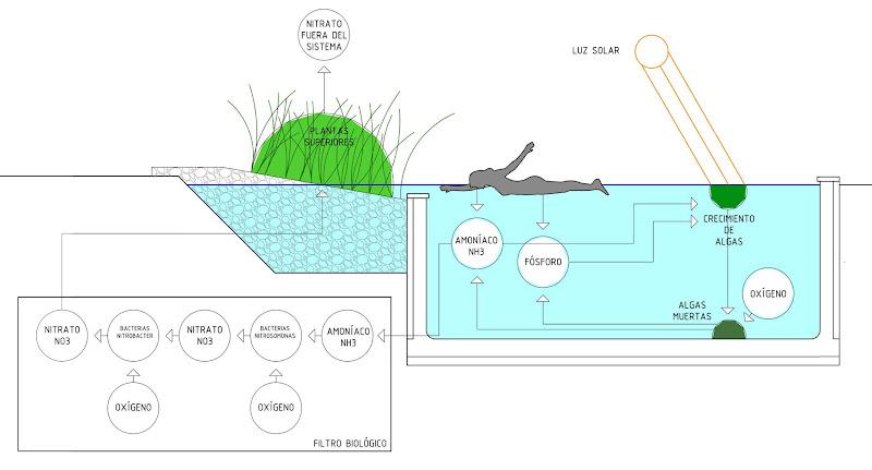 Filtro biológico piscina natural