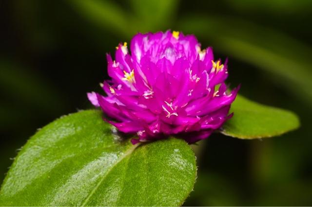 Macro photo - flower