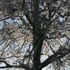 tn_lachaux-2010-12-27.jpg