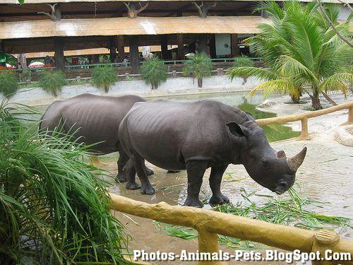 https://lh3.googleusercontent.com/-rkvlLklp3iM/TXxmNN42bII/AAAAAAAAAHE/dOhFv9lqnjI/s1600/Animal+pictures+_Rhinos.jpg