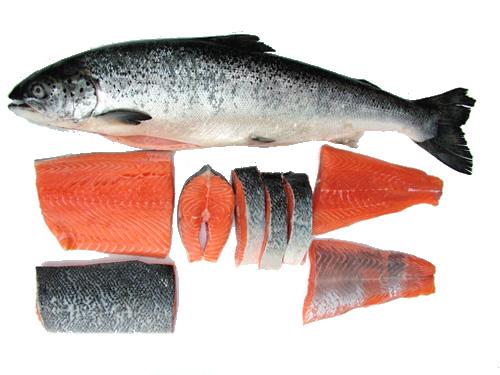 [Image: salmon.jpg]