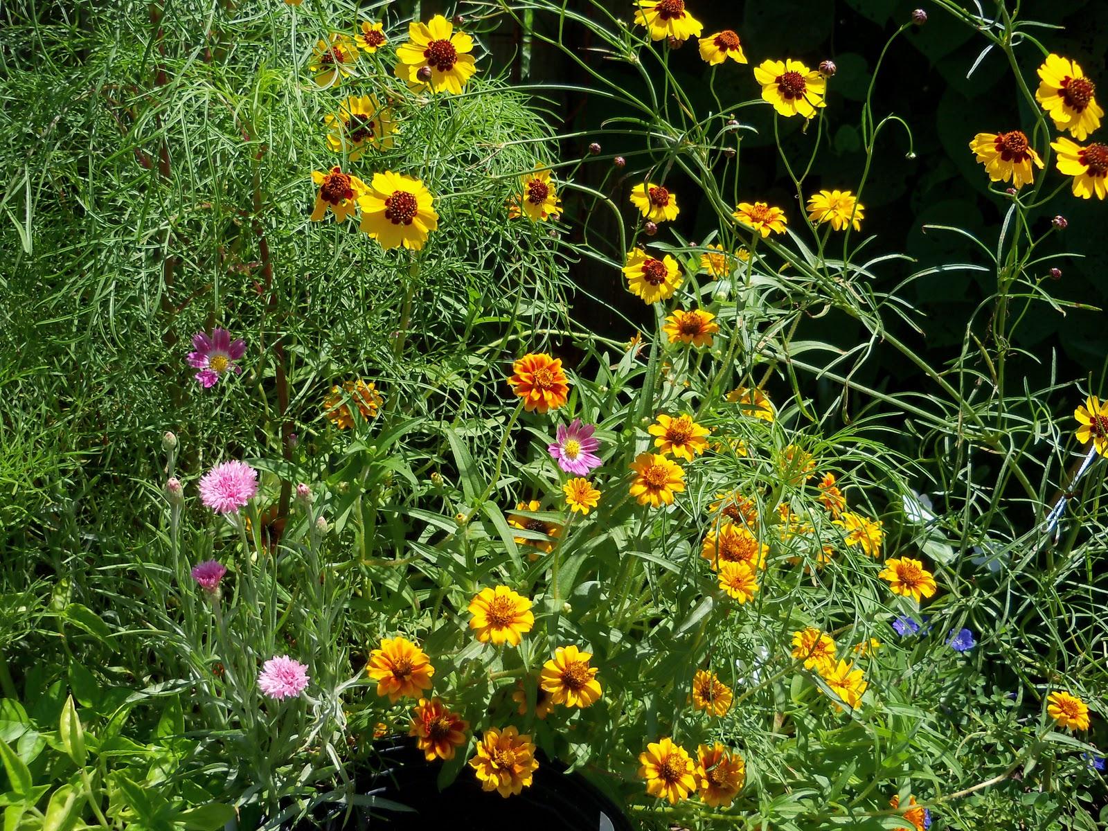 Gardening 2010, Part Three - 101_4416.JPG