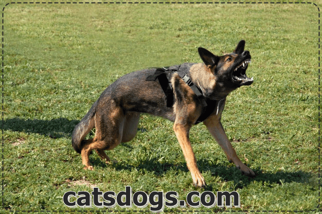 Dog training on ten ways and how to prevent and stop dog barking