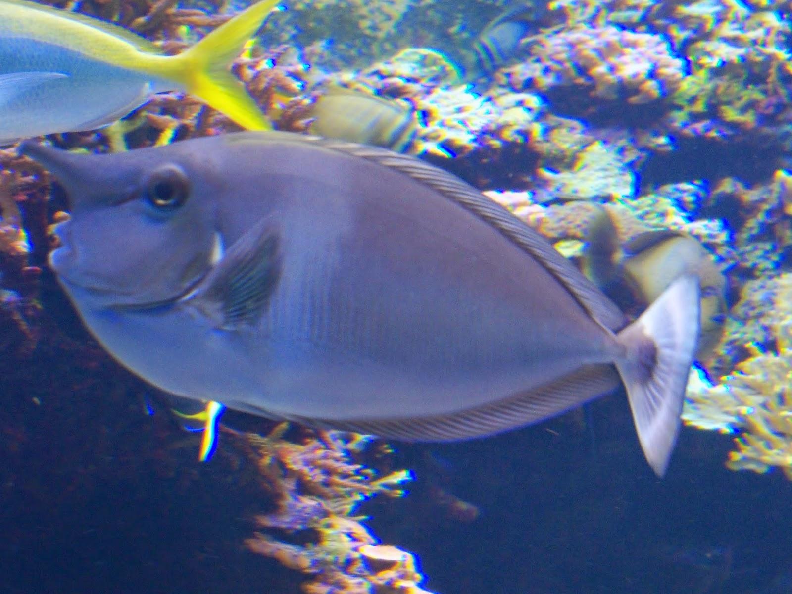 Downtown Aquarium - 116_4002.JPG