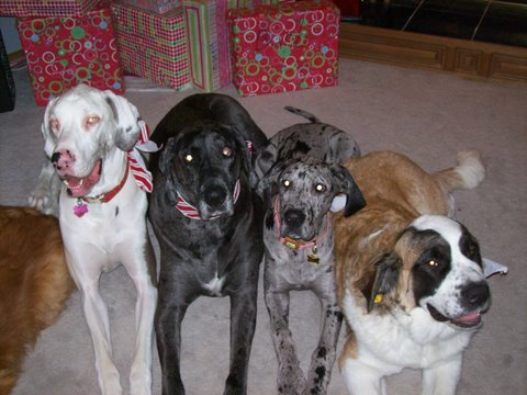 The Jackson/Ruttencutter girls-Ethel, Fyrn, Blanche & Faye