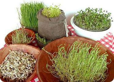 Consejos para gerinar semillas fácilmente