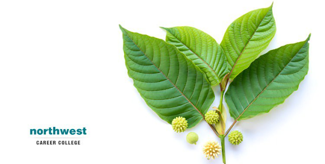 How does Kratom works for the body and mind