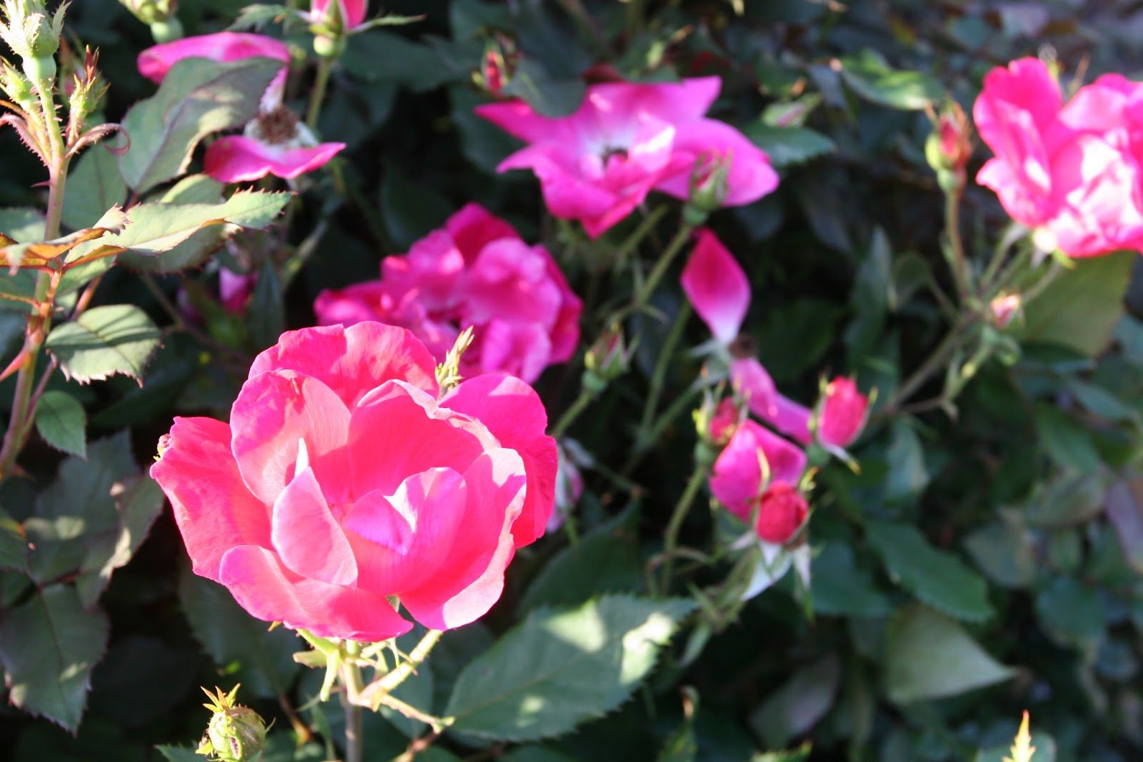 Gardening 2012 - IMG_2906.JPG