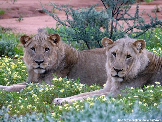 leonas-erindi-namibia.JPG