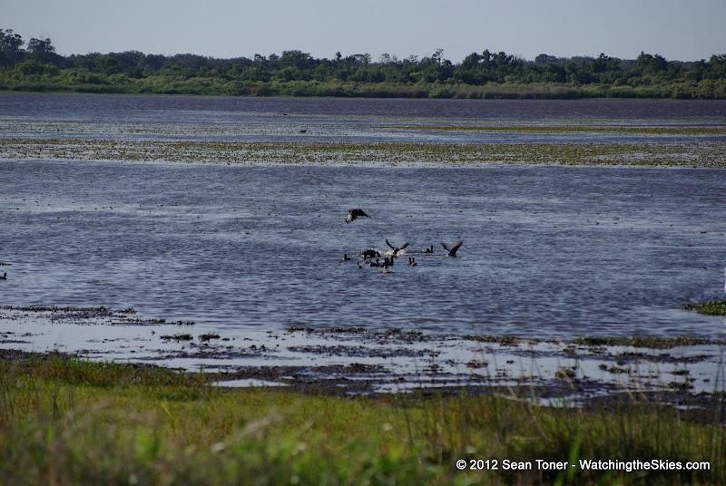 04-06-12 Myaka River State Park - IMGP4455.JPG