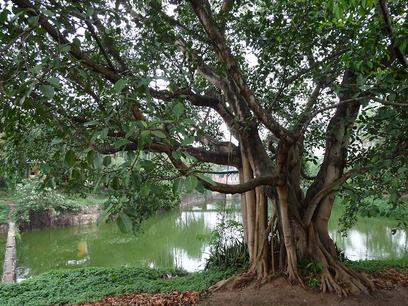 Chine .Yunnan . Lac au sud de Kunming ,Jinghong xishangbanna,+ grand jardin botanique, de Chine +j - Picture1%2B695.jpg