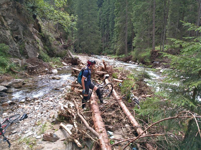 Urcand pe vale spre Berevoescu prin locuri prin care acum 2 ani era un forestier aproape impecabil.