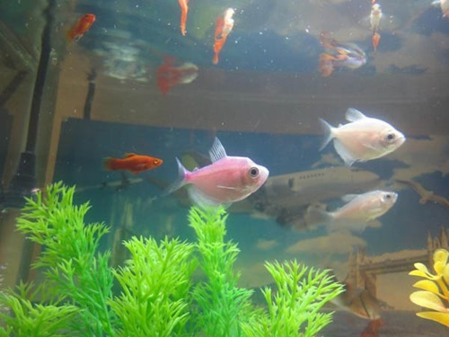 5-gallon-fish-tank-for-sale