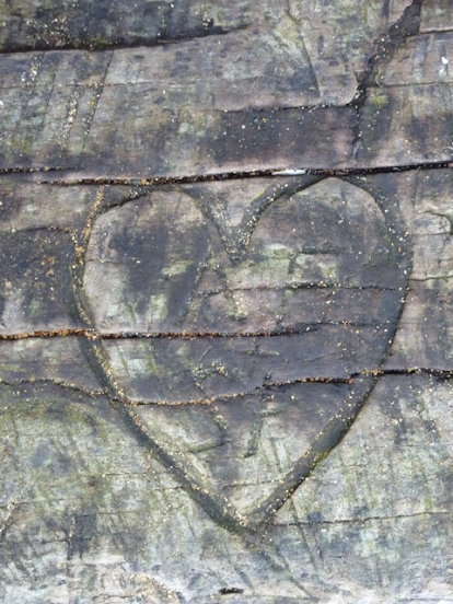 According to this old heart in an old log at Nanaimo's Stephenson Point, AS ♥s SF.